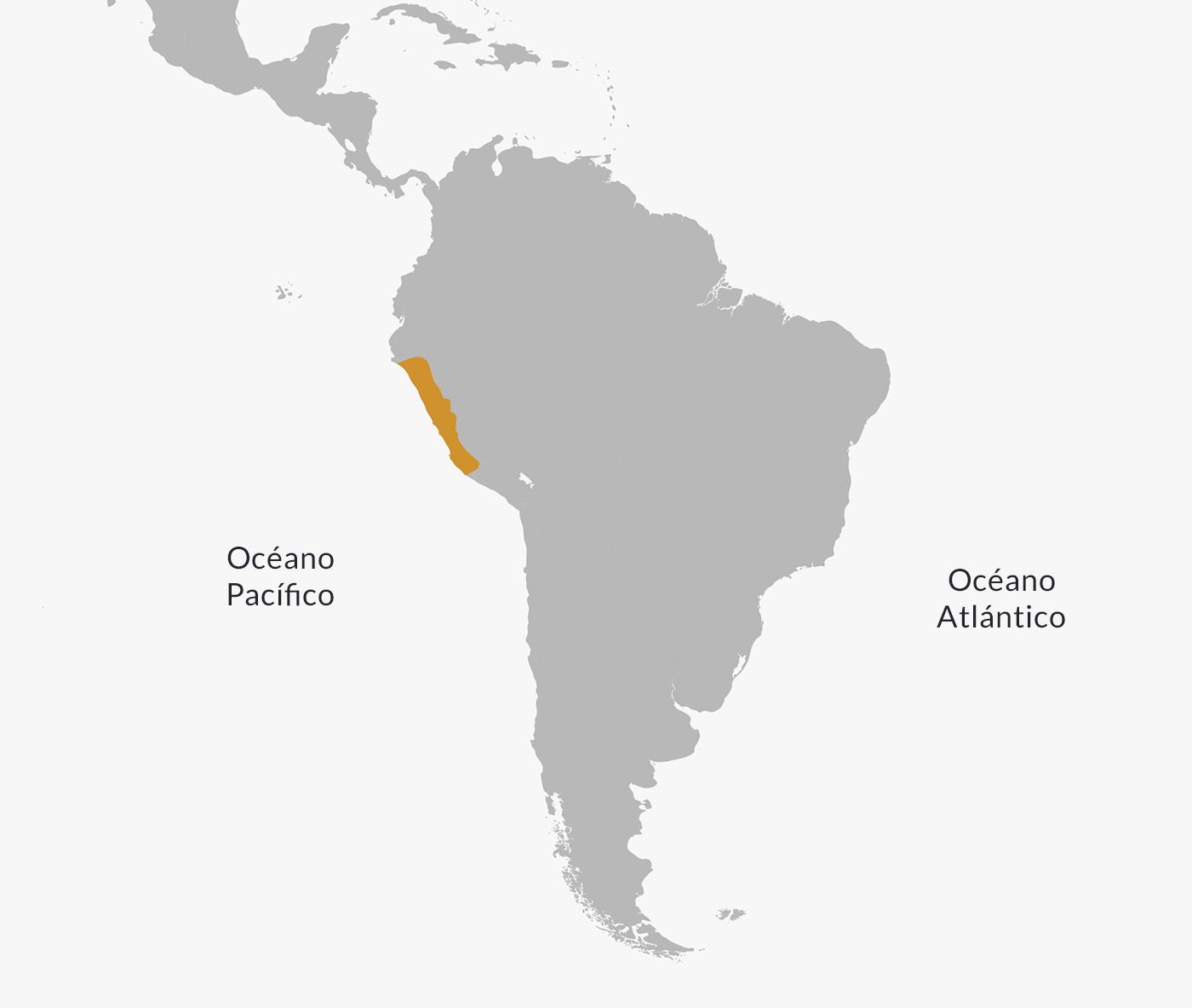 Chavín Civilization | Culture, Economy, Religion & Characteristics