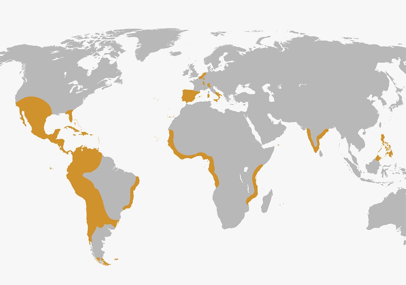 El Imperio español durante el reinado de Felipe II.
